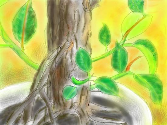 ゴムの木- 1.jpg