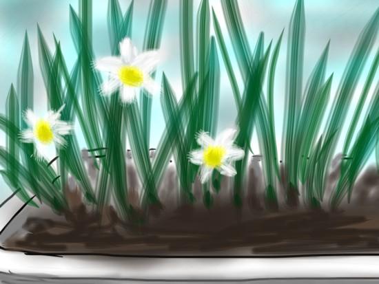 スイセン花壇 - 1.jpg