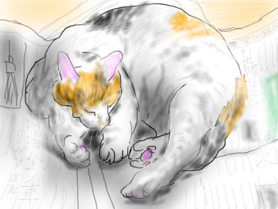 新聞の上で眠る猫- 1.jpg
