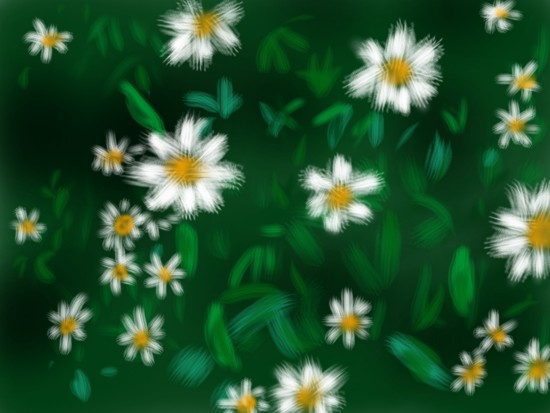 菊の一種 - 1.jpg