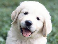 ごみを拾う犬もも子 —「ごみポイ捨て禁止条例」制定のきっかけになった名犬