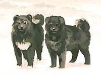 南極犬物語—南極大陸に残されたタロ、ジロたちは...