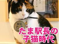 たま駅長の子猫時代−たまが子猫のときのかわいい写真がいっぱい!